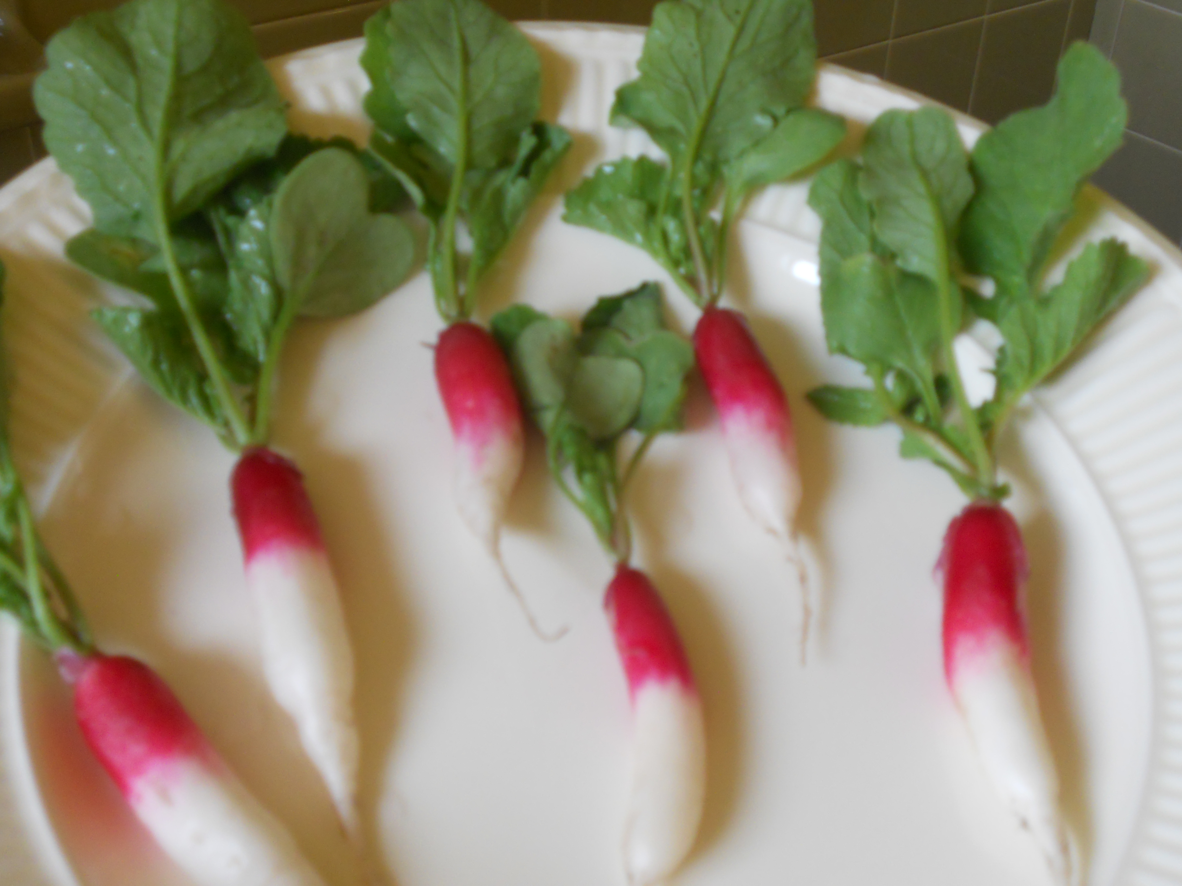 French Breakfast Radishes for Cedric Maxwell