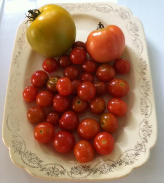 Still Aunt Tomato