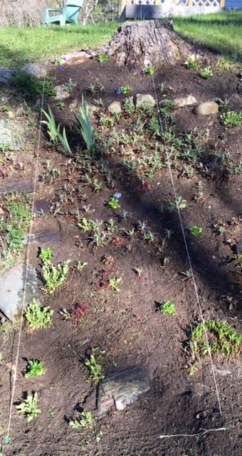A Garden Segment