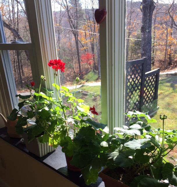 the-geraniums